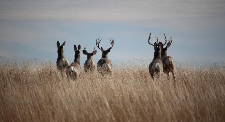 freedom fridays - deer running